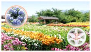 篠山玉水ゆり園